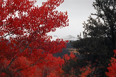 Scarlet Fall Leadville