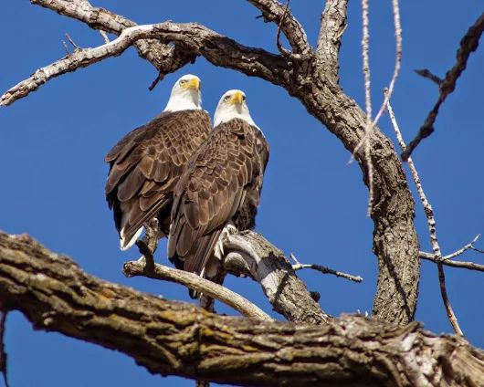 twin-eagles-arkansas-valley